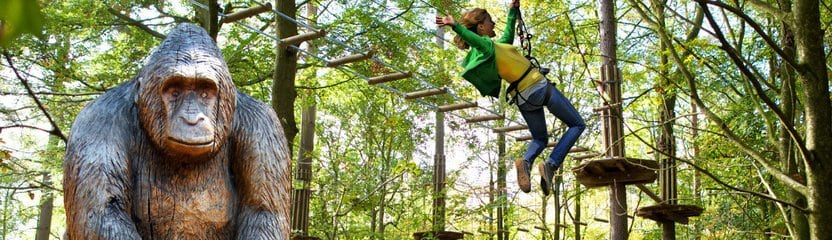 Go Ape at Wendover Woods